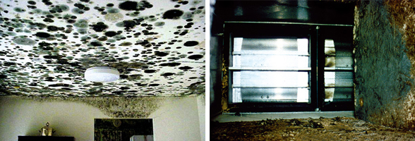 Mold on ceiling and air duct.